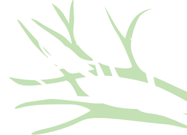 branches_r.png